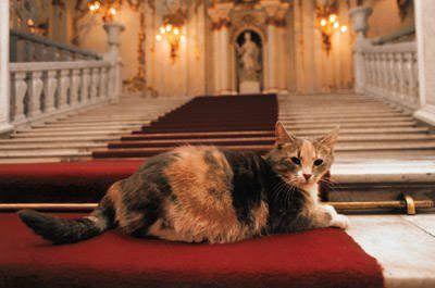 i gatti dell'hermitage